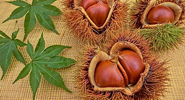 10月の旬の食材は「栗」